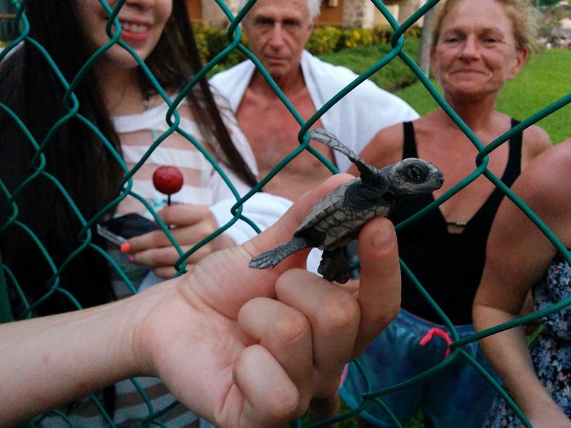 Wylęgarnia dla żółwi w Puerto Vallarta w Meksyku
