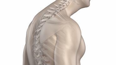 Mianem wdowiego garbu określa się wyniosłość tkankową, która powstała u podstawy karku, a konkretnie na granicy szyi i pleców