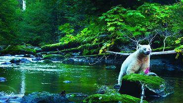 Dziewicza Ameryka. Emisja na National Geographic Channel  10 czerwca godz. 14.00 / fot. ngc.gazeta.pl