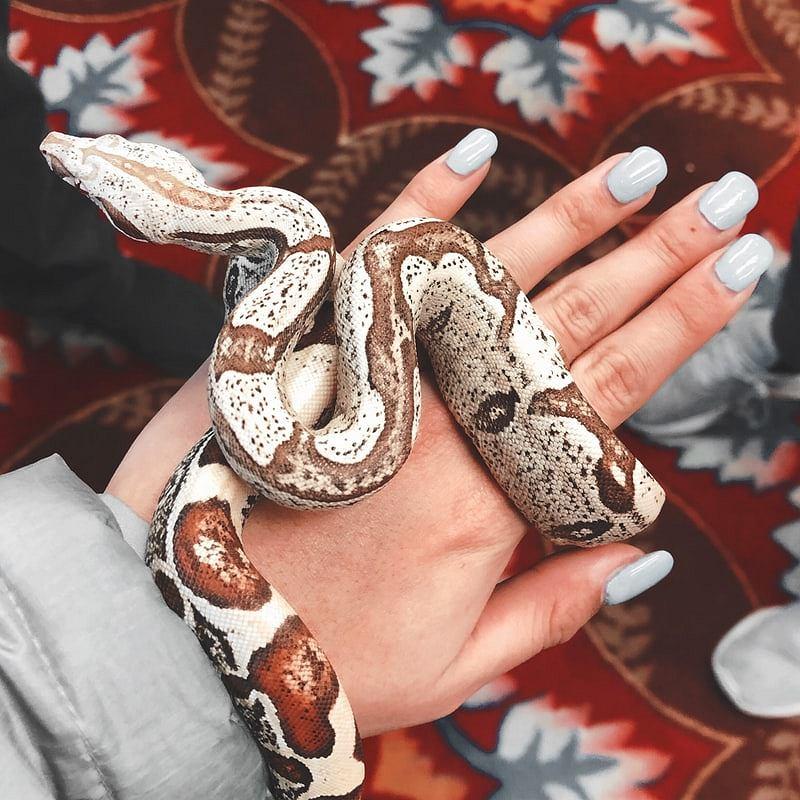 Snake nails - jak wygląda ten modny manicure? Podpowiadamy, jak go zrobić