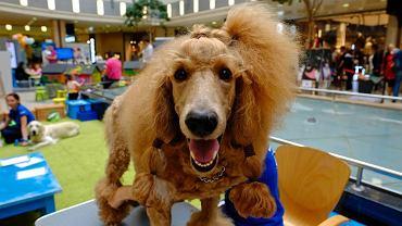 Pasaż Grunwaldzki przyjazny dla psów