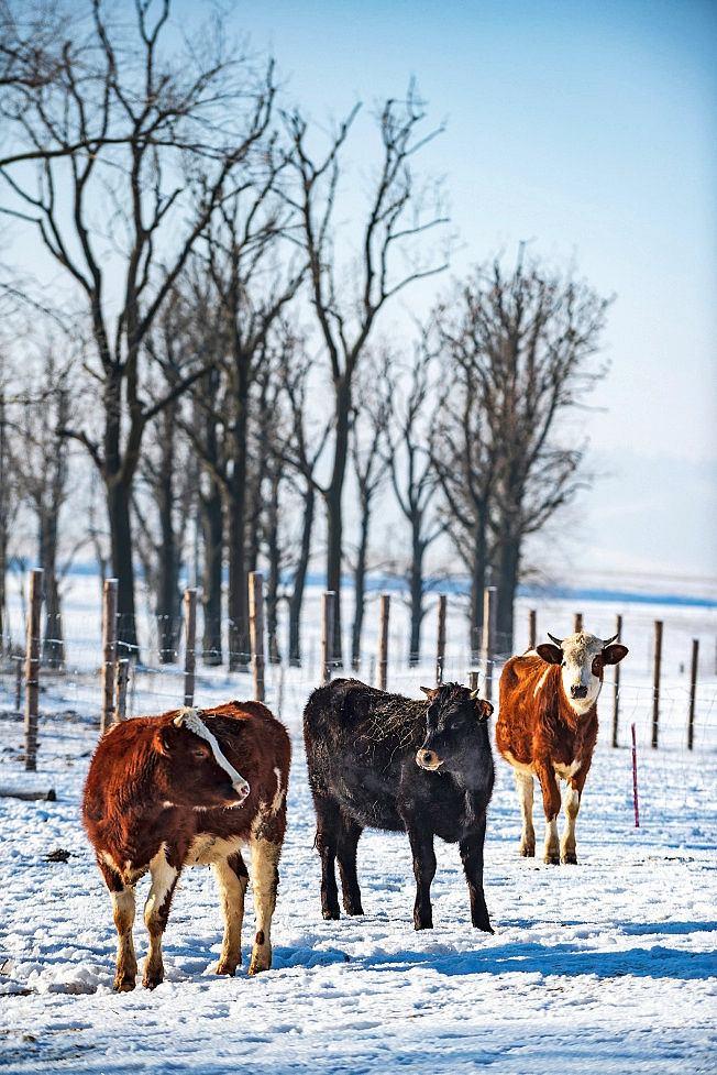 Wańczykówka, Krzeszów, ekologiczne gospodarstwo Wańczykówka zajmujące się produkcją serów.