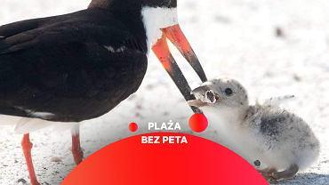 Amerykanka sfotografowała ptaka, który karmi pisklę niedopałkiem papierosa