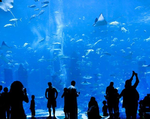 Akwarium w jednym z centrów handlowych Dubaju/ Fot. Shutterstock