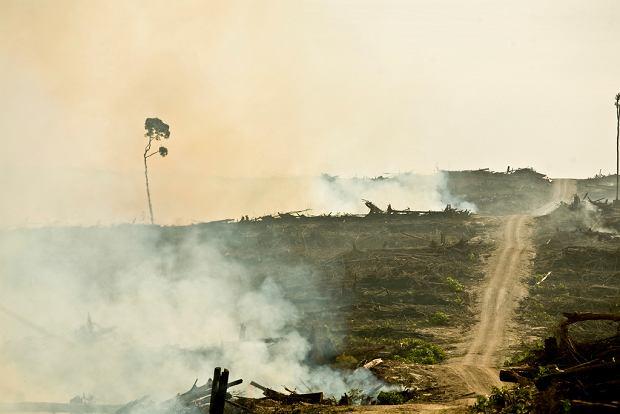 Wypalane indonezyjskie lasy deszczowe