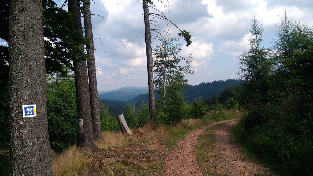 Widok na Góry Sowie z trasy J3 pod górą Borowa