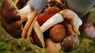 Jak czyścić grzyby? Kilka praktycznych wskazówek na temat tego, co zrobić tuż po grzybobraniu. Zdjęcie ilustracyjne