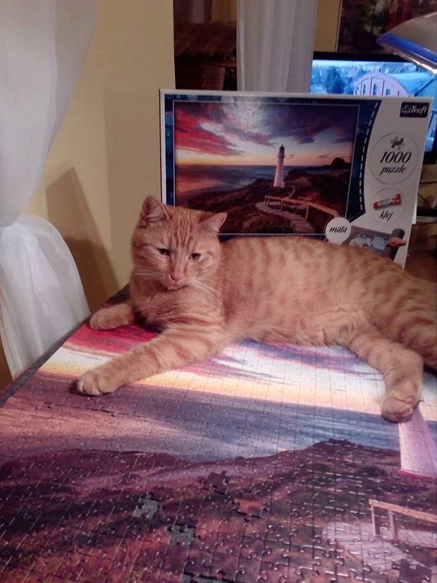 Zdjęcie numer 17 w galerii - Karmel, Daktyl, Kapitan Benny, Ptyś, Wiesław... Kochane i piękne - oto Wasze koty [GALERIA NA DZIEŃ KOTA]