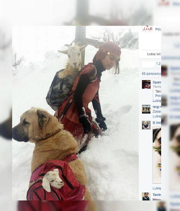 Dziewczynka i jej wierny pies uratowali kozy