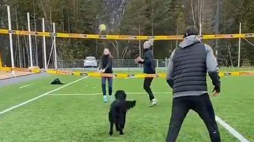Pies wszedł na boisko i zaczął grać w siatkówkę