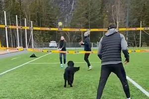 Hit! Pies wszedł na boisko i zaczął grać w siatkówkę. Ponad dwa mln odtworzeń [WIDEO]