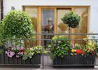 Kwiaty na balkonie w trakcie upałów - wypróbuj hydrożel