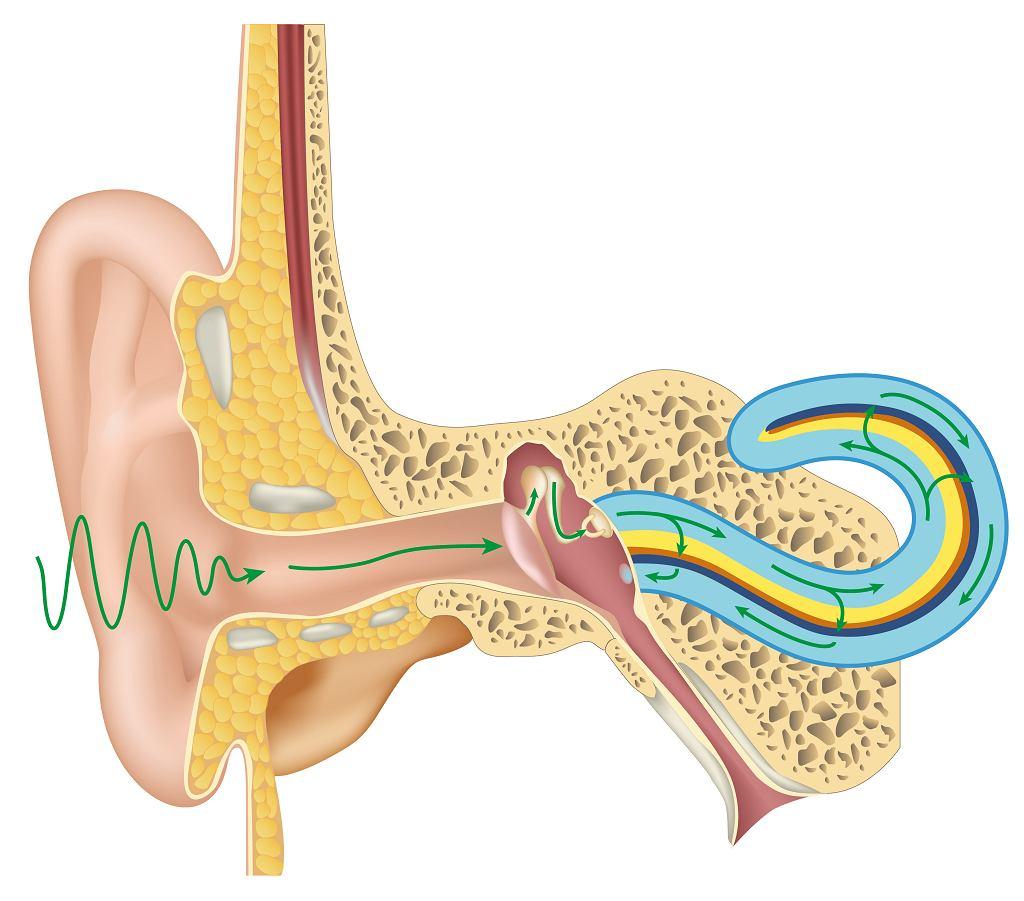 Neuropatia słuchowa to schorzenie, które jest badane stosunkowo od niedawna