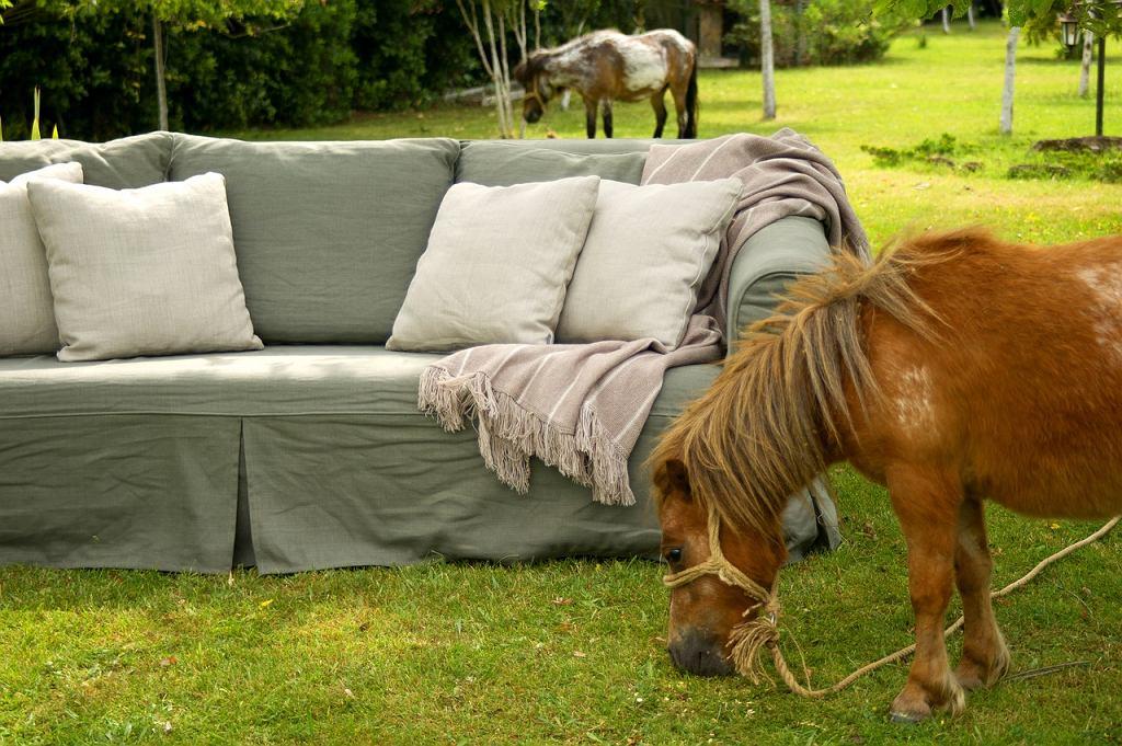 Poduszki ozdobne do ogrodu. Zdjęcie ilustracyjne