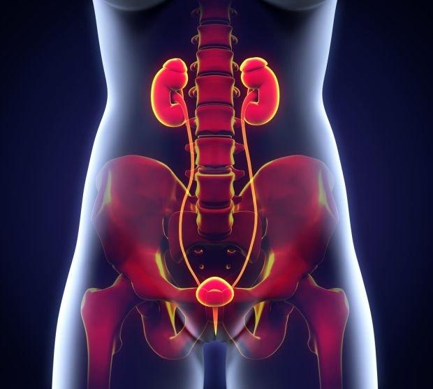 USG układu moczowego wykonywane jest przede wszystkim u pacjentów z podejrzeniem zmian w nerkach