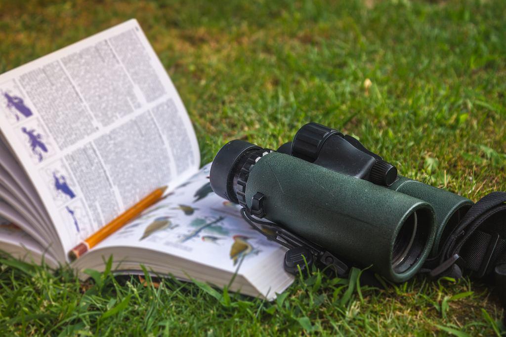 Książki o ptakach to idealne pozycje dla małych miłośników przyrody. Zdjęcie ilustracyjne
