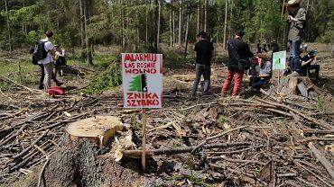 Protesty w Puszczy Białowieskiej