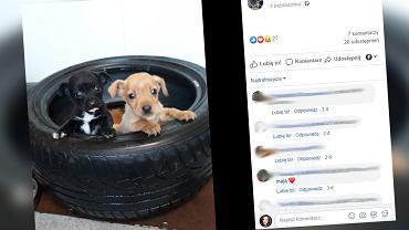 Wielichowo: Ktoś wyrzucił dwa psy pod bramę śmietniska
