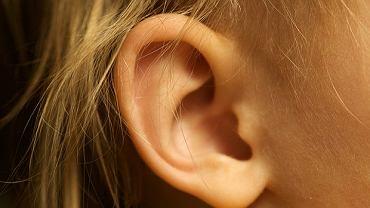 Ucho składa się z ucha zewnętrznego, środkowego i wewnętrznego