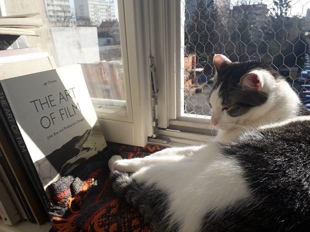Zdjęcie numer 19 w galerii - Karmel, Daktyl, Kapitan Benny, Ptyś, Wiesław... Kochane i piękne - oto Wasze koty [GALERIA NA DZIEŃ KOTA]