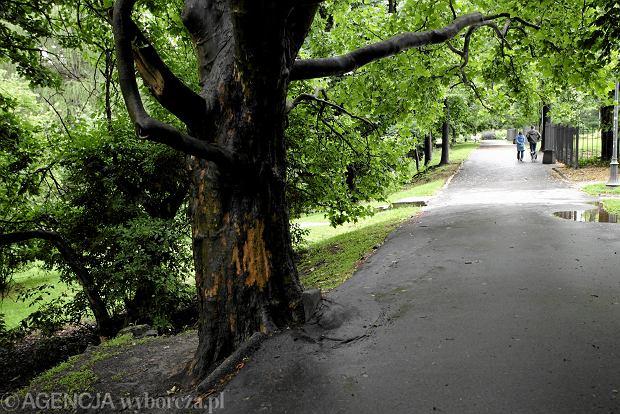 Aleja Na Skarpie w Warszawie. Tu także wycięto drzewa.
