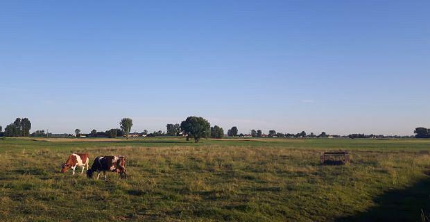 Wg rządowych planów, tam gdzie dziś są pastwiska i pola uprawne stanie Centralny Port Komunikacyjny