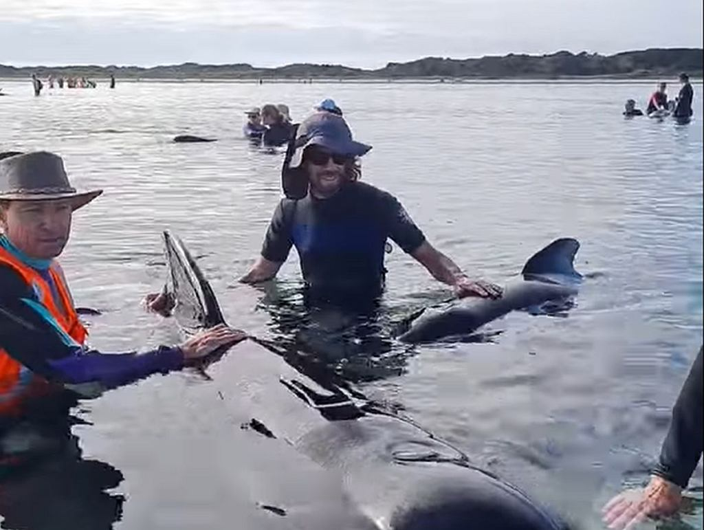Akcja wolontariusz w 'pułapce dla waleni'