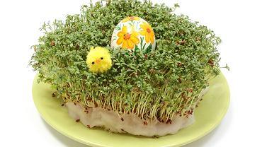 Rzeżucha jest doskonałą ozdobą wielkanocnego stołu. Kiedy i jak wysiać rzeżuchę, aby zdążyć na święta?