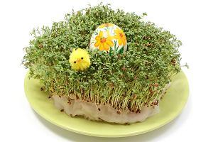 Rzeżucha na Wielkanoc: kiedy i jak wysiać rzeżuchę na święta?