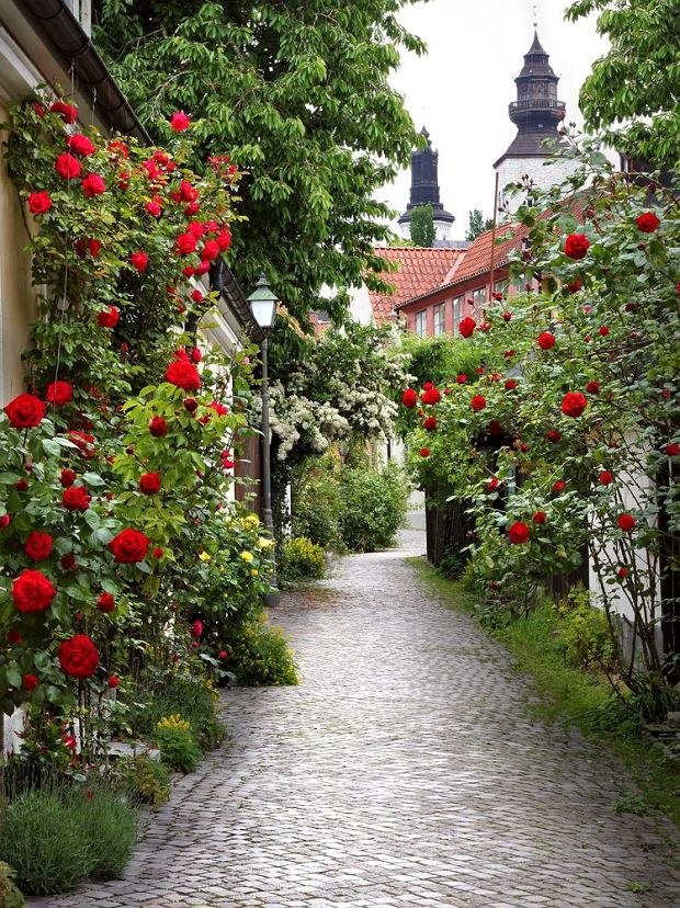 """Gotlandia nazywana jest """"Wyspą Róż i Ruin"""". Uliczka w Visby / fot. Shutterstock"""