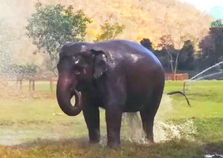 W rezerwacie dla słoni...