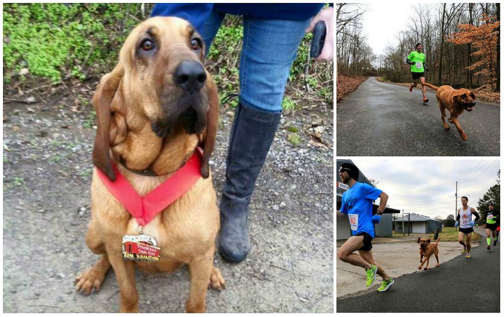 Ludivine - pies, który przebiegł półmaraton