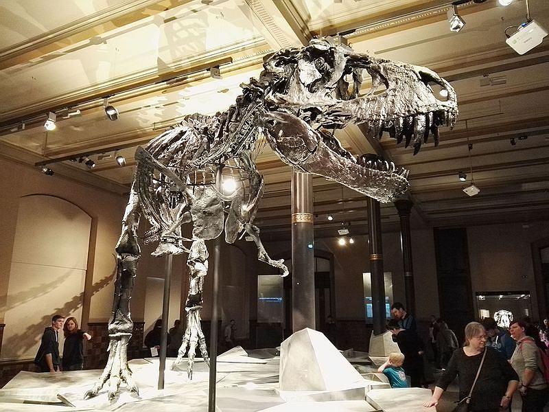Tyranozaur Tristan w Muzeum Historii Naturalnej w Berlinie / Wikimedia Commons