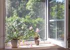 Moskitiery na okno - skuteczny sposób na walkę z owadami latem