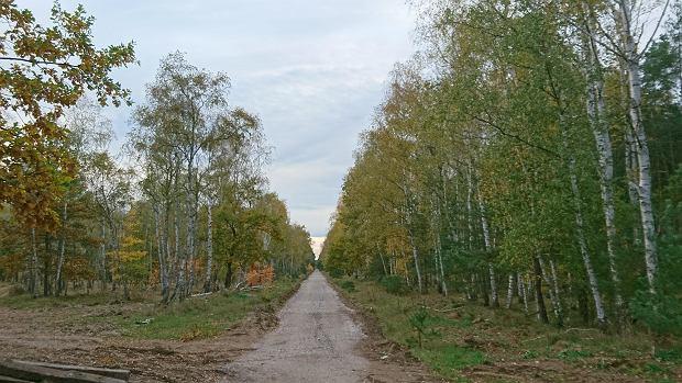Zdjęcie numer 1 w galerii - Nowa ścieżka dla rowerzystów biegnie przy Motoarenie, bajeczne kolory wokół [ZDJĘCIA]
