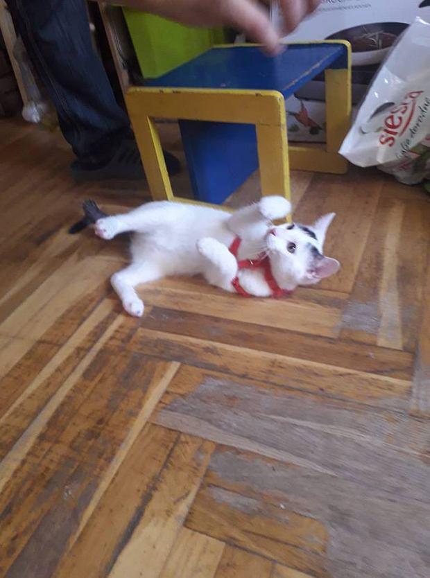 Zdjęcie numer 20 w galerii - Karmel, Daktyl, Kapitan Benny, Ptyś, Wiesław... Kochane i piękne - oto Wasze koty [GALERIA NA DZIEŃ KOTA]