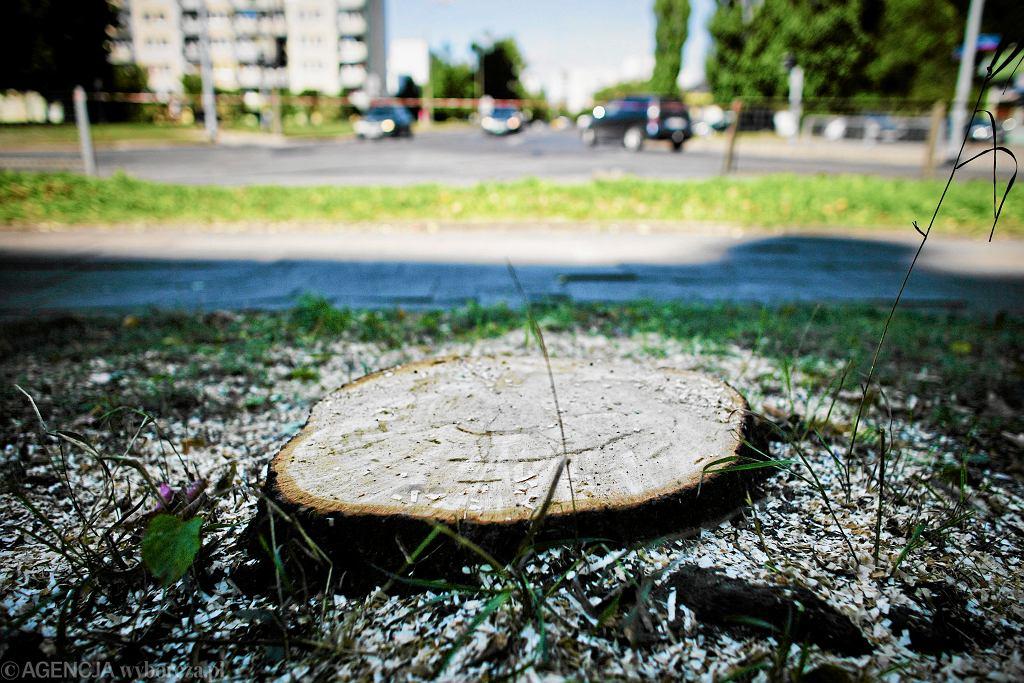 Ktoś ukradł na Ursynowie... drzewo. Władze dzielnicy szukają złodzieja i proszą o pomoc