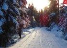 Gdzie wybrać się na biegówki, gdy blisko zimy nie widać [NAJLEPSZE TRASY]
