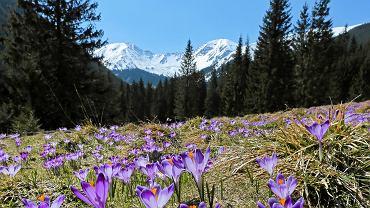 Tatrzański Park Narodowy (zdjęcie ilustracyjne)