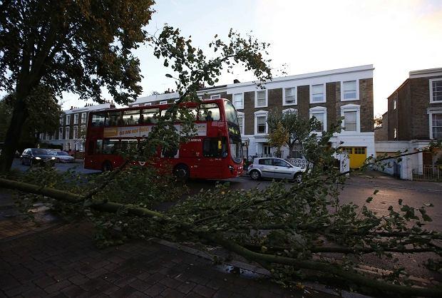 Autobus przejeżdża obok powalonego drzewa w Londynie