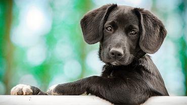 Jak obliczyć wiek psa? Najlepiej sprawdzić stan uzębienia czworonoga.