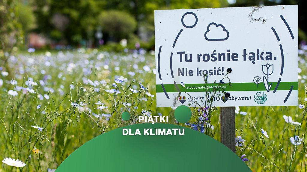 Łąka kwietna na rondzie Kazimierza Zenktelera w Katowicach (zdjęcie ilustracyjne)