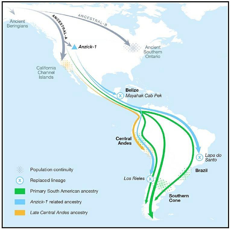 Mapa pokazująca, jak została zasiedlona Ameryka - według najnowszych ustaleń genetyków. Ludzie przeszli przez lądowy most Beringię, który niegdyś łączył Azję z Ameryką. Na mapce zaznaczone są trasy dwóch głównych populacji - A i B. Amerykę Południowa została zasiedlona w co najmniej trzech falach, które były odnogami populacji A. Te trzy migracje zaznaczone są na niebiesko (najstarsza sprzed 15 tys. lat, mająca genetyczne pokrewieństwo z kulturą Clovis - szczątkami ze stanowiska Anzick w Montanie), zielono (sprzed 9 tys. lat) i żółto (zasiedliła Andy 4,2 tys. lat temu)