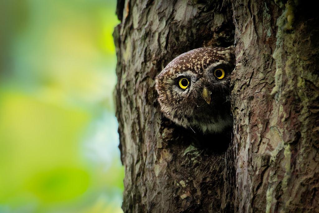 Gatunki zwierząt, które mogą wyginąć na naszych oczach
