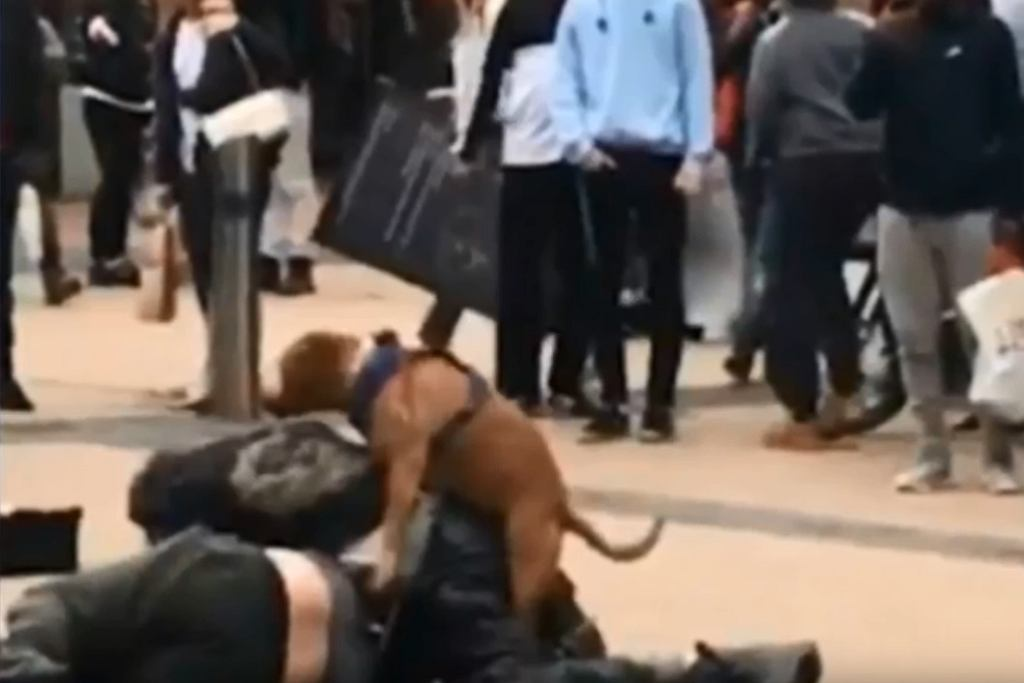Pies przerywa bójkę