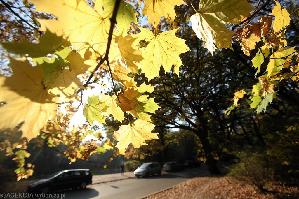 Jesień - zdjęcie ilustracyjne