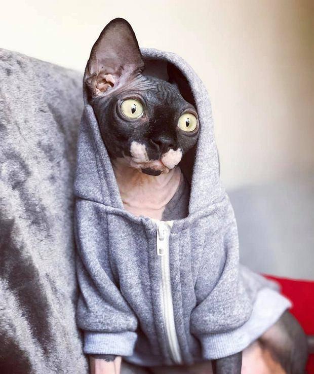 Zdjęcie numer 21 w galerii - Karmel, Daktyl, Kapitan Benny, Ptyś, Wiesław... Kochane i piękne - oto Wasze koty [GALERIA NA DZIEŃ KOTA]
