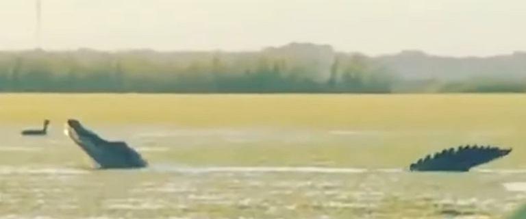 USA. Olbrzymi aligator na Florydzie. Porównano go do dinozaura [WIDEO]