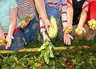 """""""Dieta wegetariańska szkodzi dzieciom"""". A jak jest naprawdę?"""