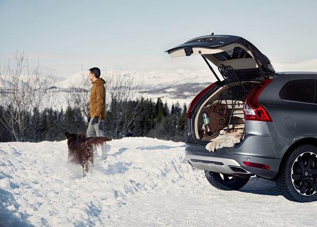 Tym razem śniegu zabrakło, ale po choinki zgłosiło się do Volvo 1200 opiekunów